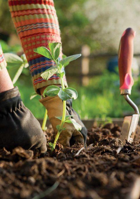 Herramientas que necesitas para tu jardín